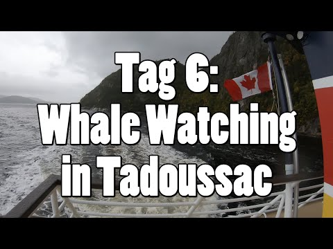 #OTRAmerika19 - Tag 6: Whale Watching in Tadoussac
