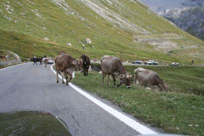 Stelvio Pass (9)