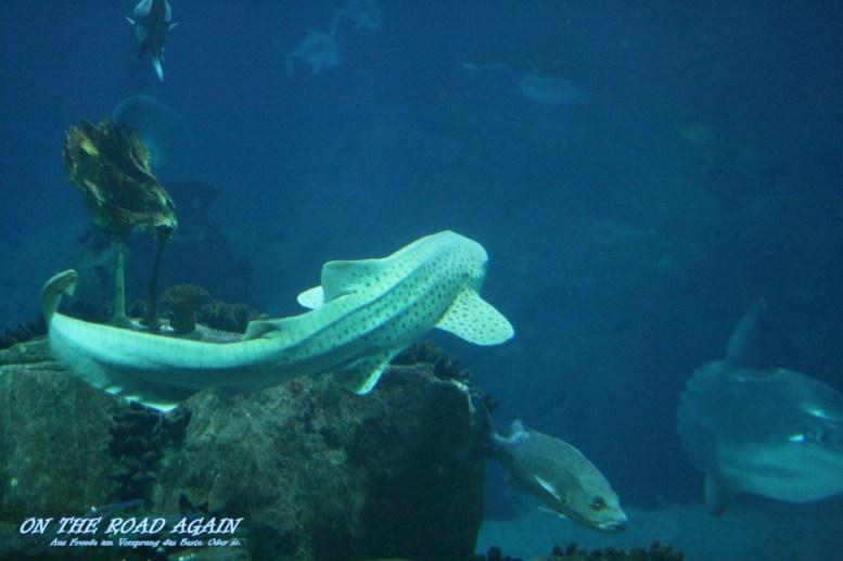 Fische im Oceanario Lissabon