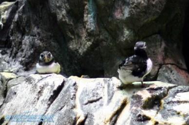 Kleine pinguinähnliche Viecher