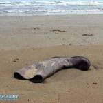 Stiefel am Strand von Vieste