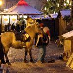 Esel auf Weihnachtsmarkt in Riga