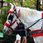 Zugpferd Central Park