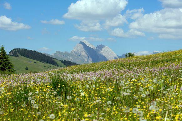 Blühende Wiese auf der Seiser Alm
