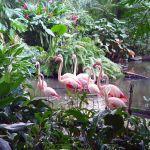 Flamincos im Regenwald, Tropical Islands