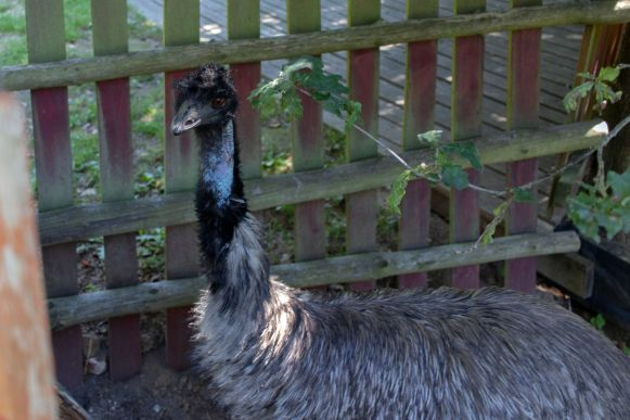 Emu Kulturinsel Einsiedel