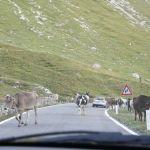 Stelvio Pass (7)