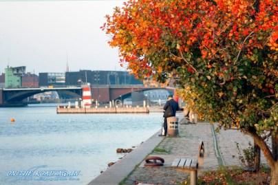 Herbst am Kanal in Kopenhagen