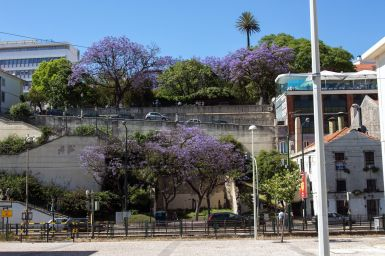 Lila Bäume in Lissabon