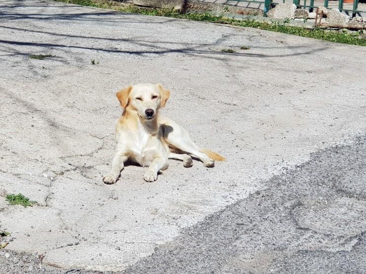Straßenhund in Süditalien