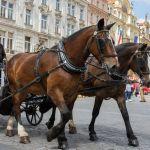 Pferdekutsche in Prag