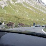 Stelvio Pass (12)