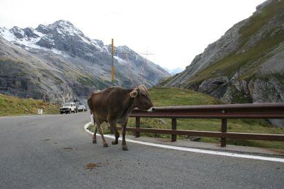 Stelvio Pass (13)