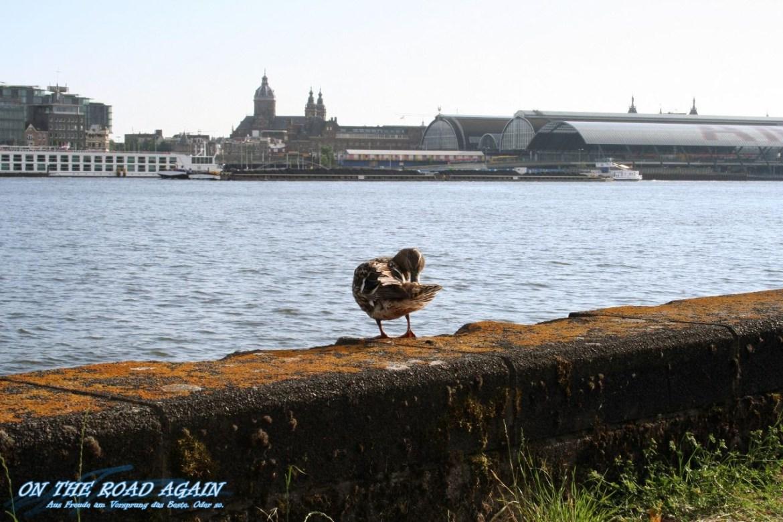 Amsterdam Noord Ente