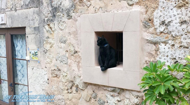Katze in Valldemossa