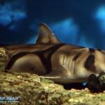 kleiner Hai oder so im Ocenario