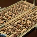 gespaltene Kakaobohnen im Chocoversum