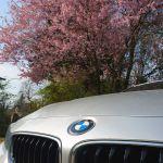 BMW 4er Coupé vor blühendem Baum