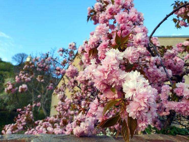Radebeul im Frühling